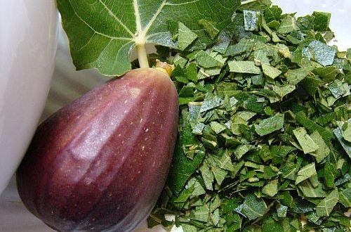 Листата от смокиня са в пъти по-лечебни от плодовете