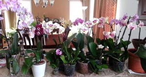 Орхидеята мощно влияе на енергията на дома! Ето какво трябва да знаете ако имате в къщи