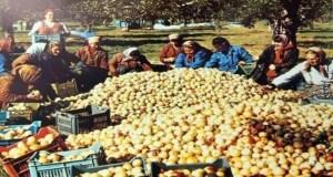 Българските ТКЗС-та не можеха да смогнат само Москва да задоволят със зеленчуци