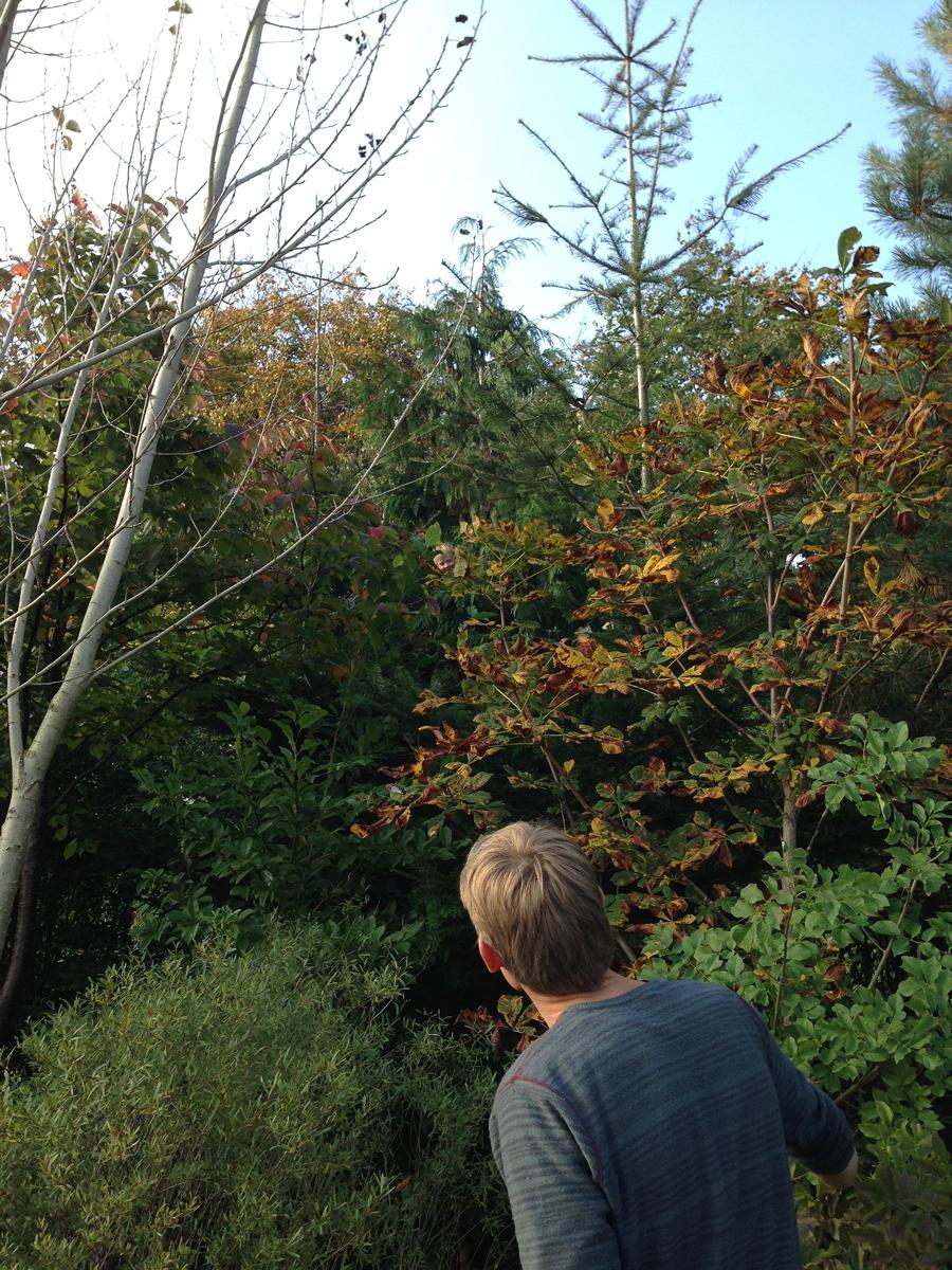Arboretumvisning 12. Foto: Dan Abelin.