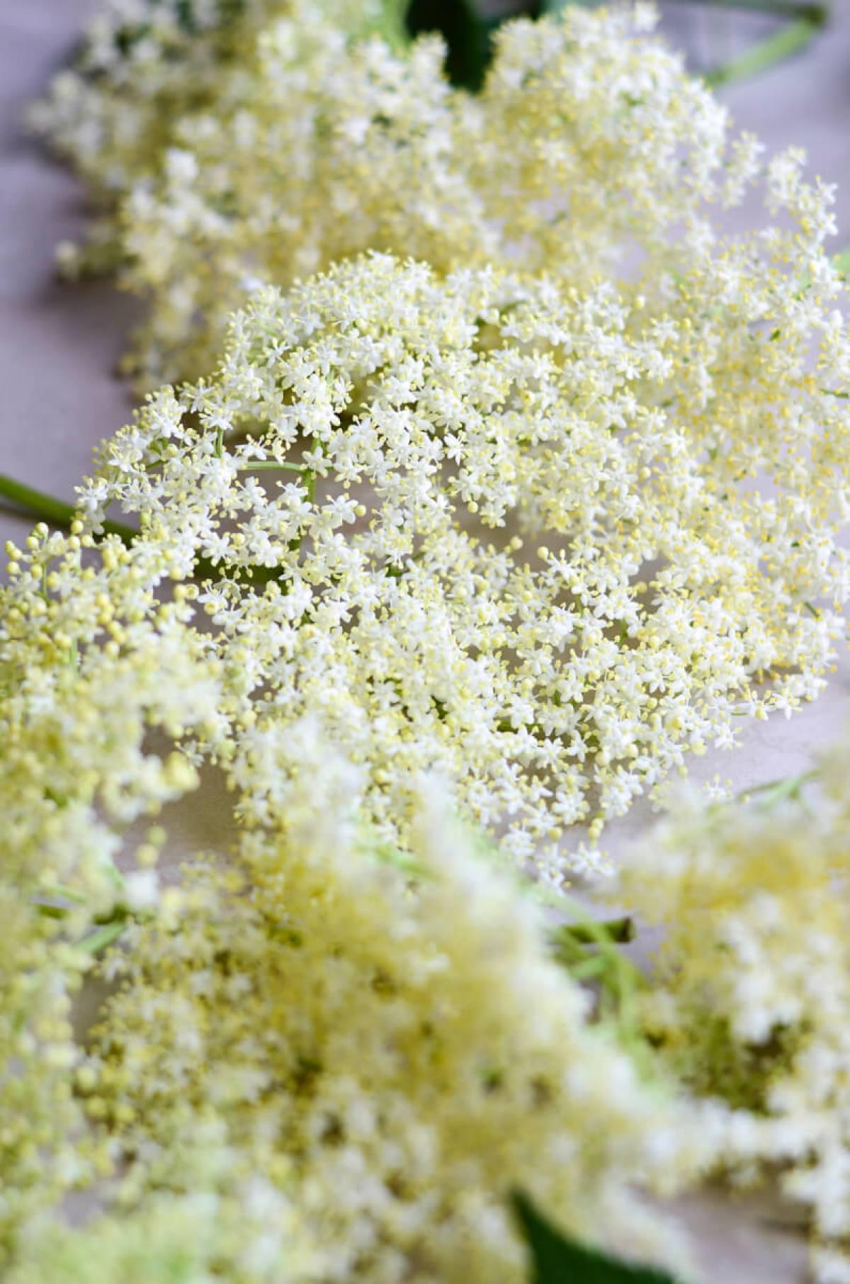seivamedzio ziedu sirupas skanios dienos (4)