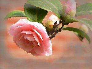 Цветочный-гороскоп-22