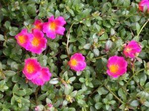 Цветочный-гороскоп-7