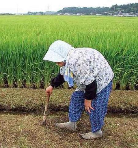 農家の老婆