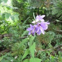 オリュンポス山・お花畑