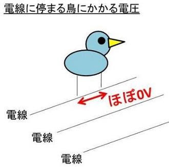 電線に止まる鳥の電圧