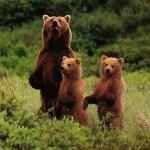 Медведиха