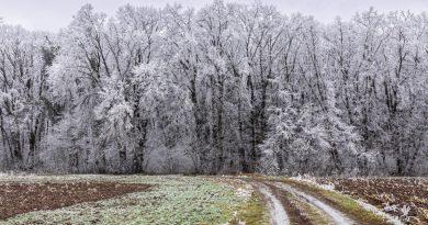 Na obali Dunava –  Neštin u ledu