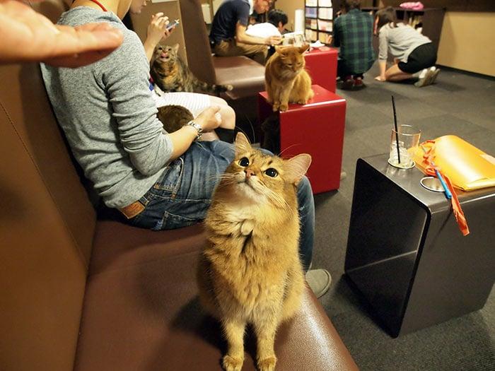 neko café de gatos