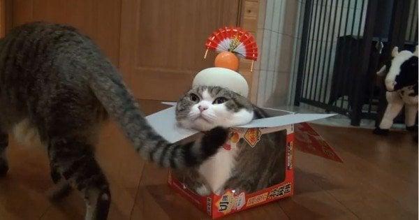 Maruchan - Um dos gatos mais famosos do mundo