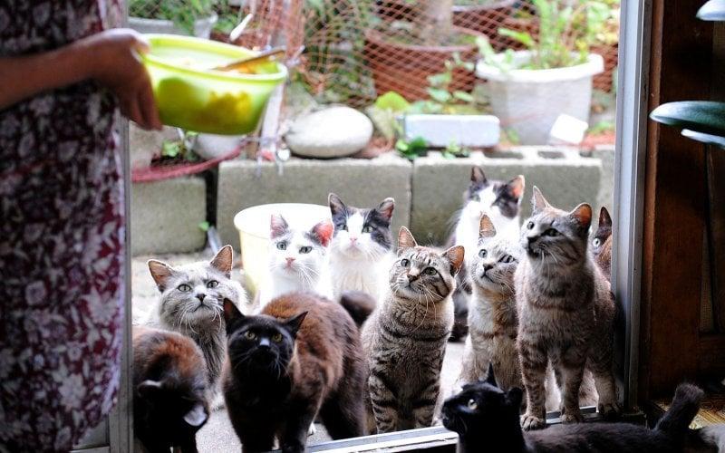 Levar animais para o japão é difícil?