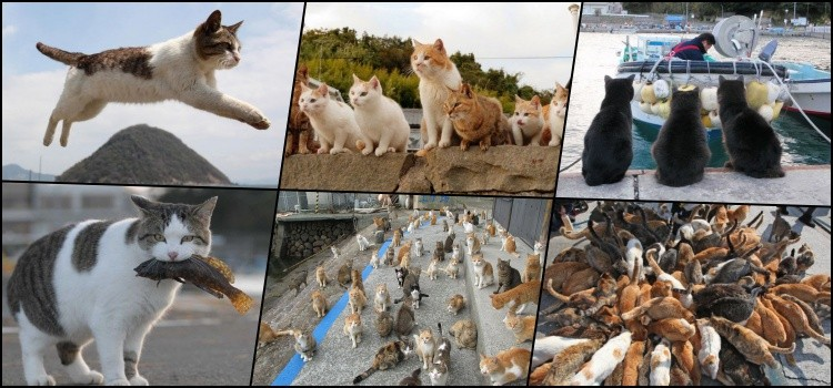 Discover cat-dominated islands in japan - cat island