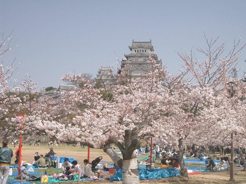 Coisas para se fazer em Maio - Japão - Festivais e eventos de maio - castelo himeji sakura 3