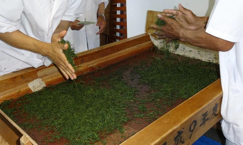 Tipos de chá japoneses - cha japones 2