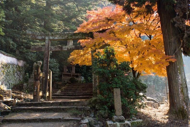 Aprecie as folhas do outono no Japão! - Miyajima outono 7