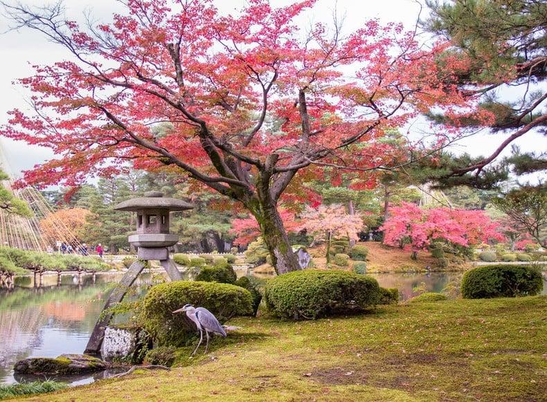 Aprecie as folhas do outono no Japão! - folhas de outono 5