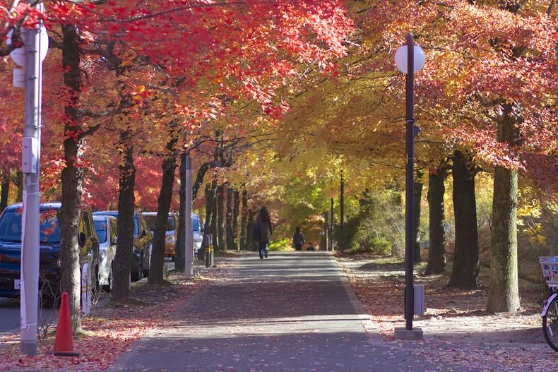 Aprecie as folhas do outono no Japão! - osaka outono 3
