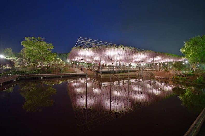 Ashikaga - Curiosidades e Atrações - ashikaga parque das flores 1