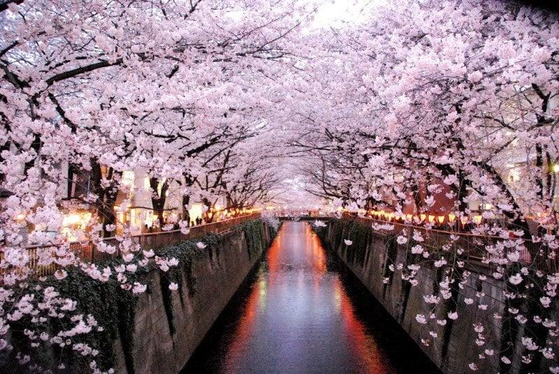 ¿Cuándo es la mejor época para visitar Japón?