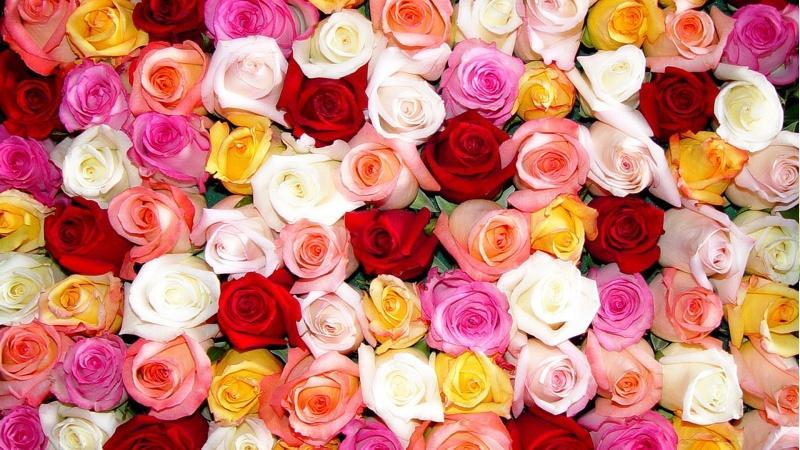 O Significado das flores no Japão 1