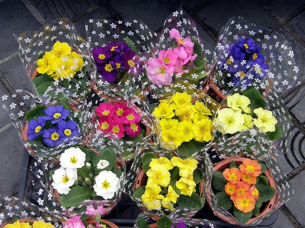 O Significado das flores no Japão 2