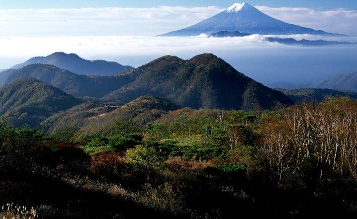 4. Phú Sĩ. rừng