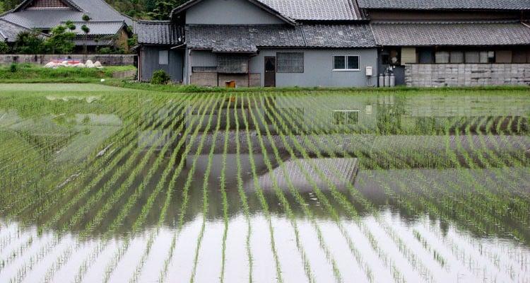 Sobrenomes Japoneses - Como surgiu e quais os mais comuns - arrozal 1