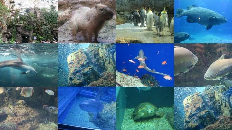 Kaiyukan - l'aquarium d'Osaka