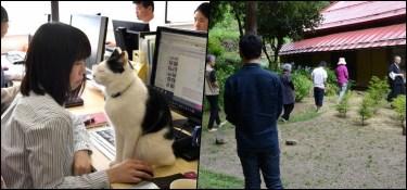gatos - gatos 1