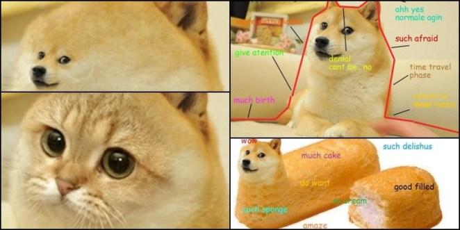 Você conhece o famoso Doge dos memes?