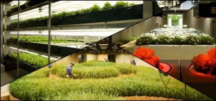 Uma fazenda dentro de um prédio? Conheça Pasona O2