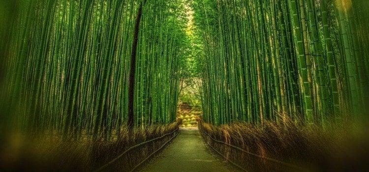 Minha experiência com as testemunhas de jeová no japão - japao bambo 1