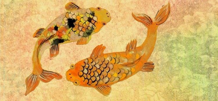 Pez koi - curiosidades y leyendas de la carpa japonesa