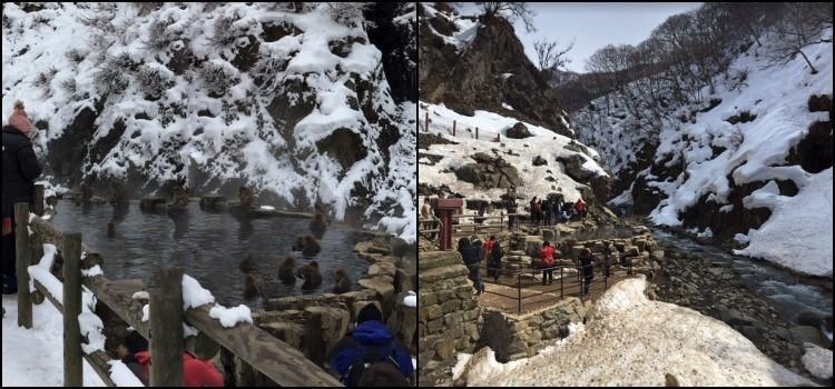 Parque jigokudani – o onsen dos macacos