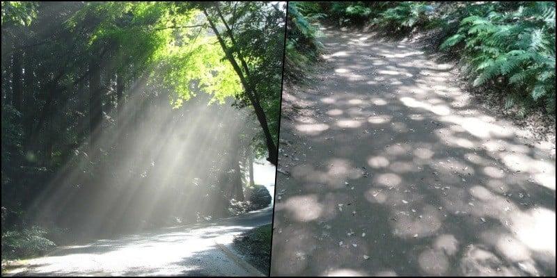 Komorebi - ánh sáng mặt trời qua những thân cây