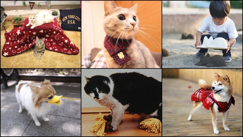 Os produtos japoneses mais bizarros do japan trend shop