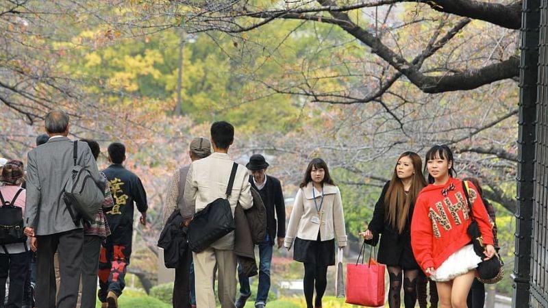 Làm thế nào để nói hòa bình trong tiếng Nhật?