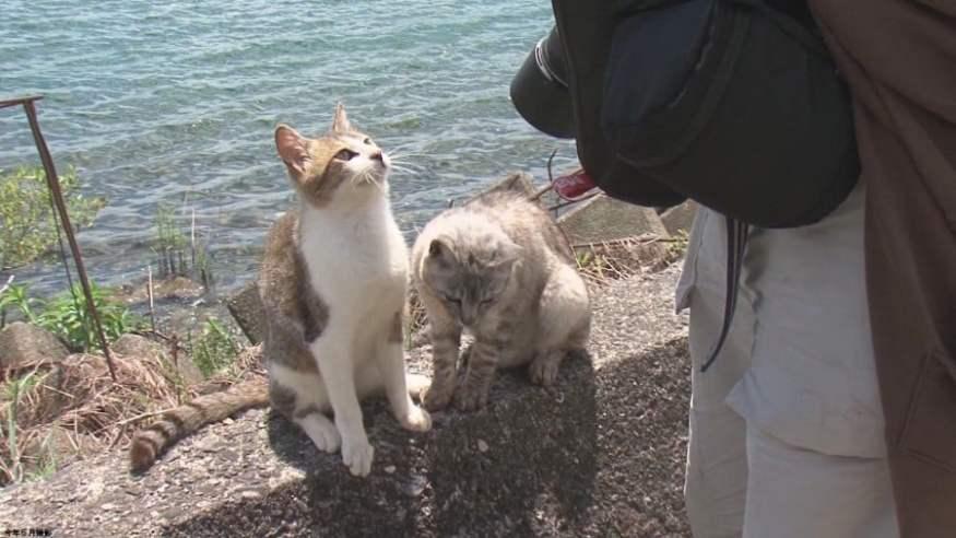 Nekojima - matugunan ang 20 mga isla ng pusa sa Japan