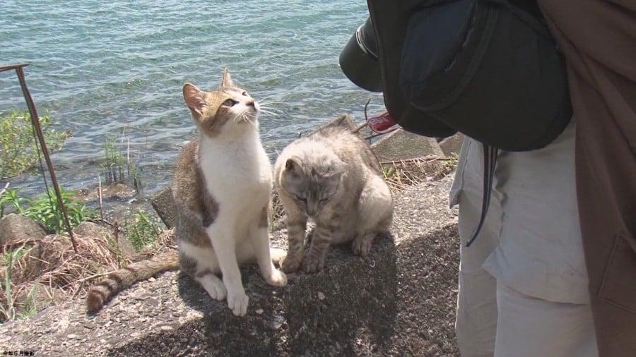 네 코지마-일본에서 20 개의 고양이 섬을 만나다
