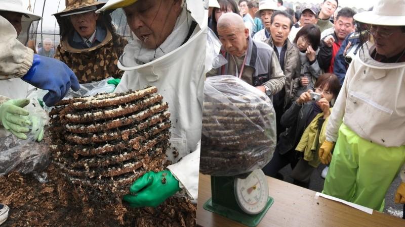 Hebo matsuri - ong bắp cày và lễ hội ấu trùng tại Nhật Bản