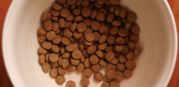 Expensive dog food just as good as grocery store varieties