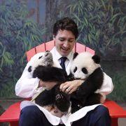 Toronto pandas cuddle with politicians