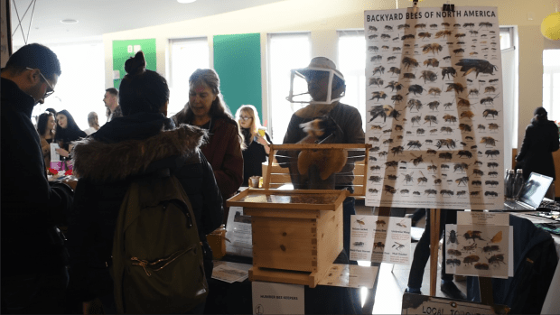 Humber Lakeshore helps the bees