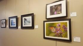 Nature's Sanctuary exhibition