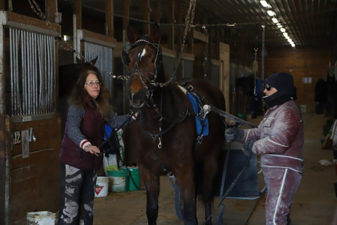 Two horsepeople prepare a horse for a training session.