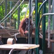 Toronto Zoo keeps animal welfare top priority during pandemic closure