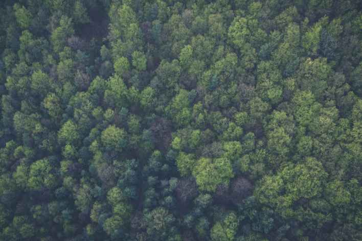 bird s eye view nature forest trees