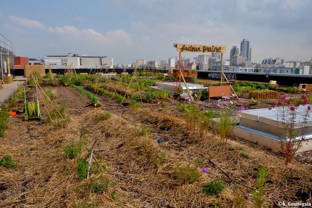 Cultures en Ville-l'agriculture urbaine