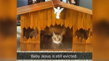 Cat replacing jesus nativity scene baby jesus is still evicted