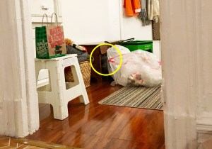 Pierogi hiding cat circled